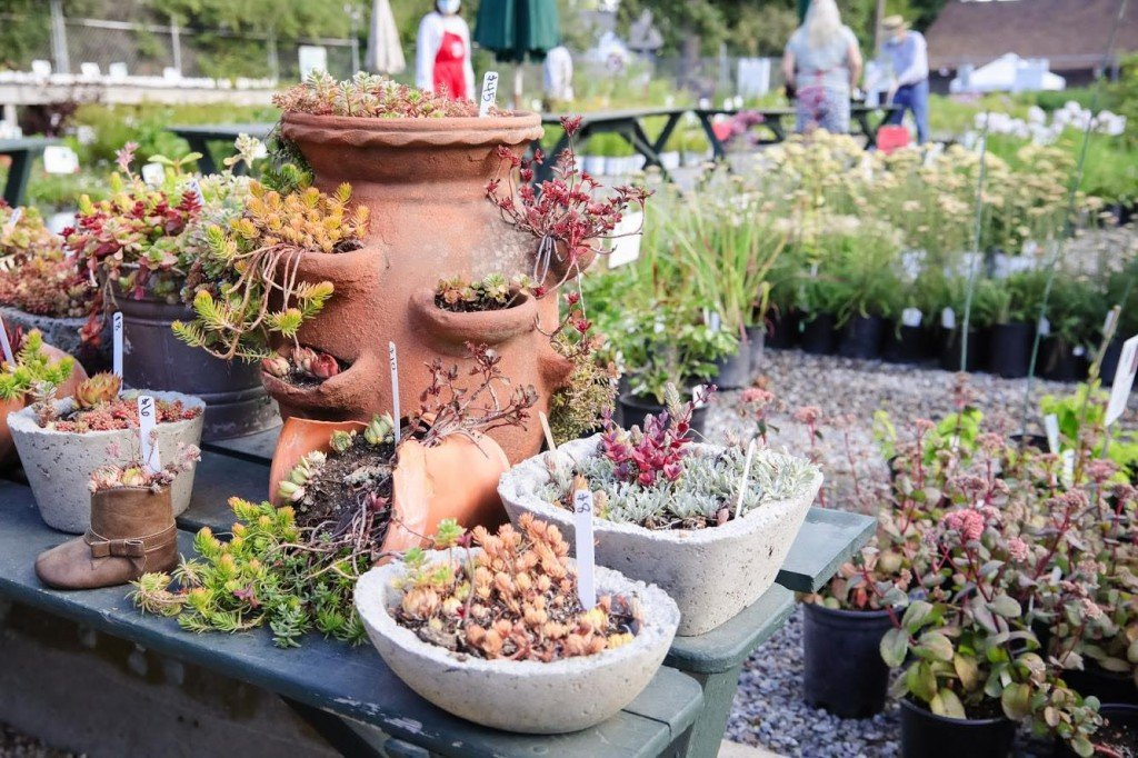 Friends of Manito Plant Sale starts this week, reservation-only for second year