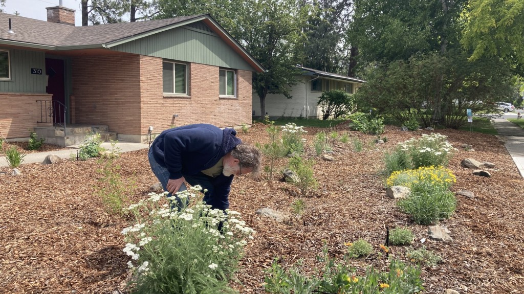 How to save water and money on your front lawn