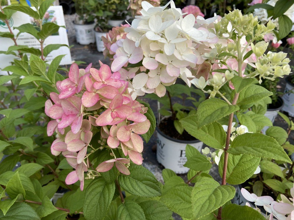Friends of Manito fall plant sale returns to one-day event in Manito Park