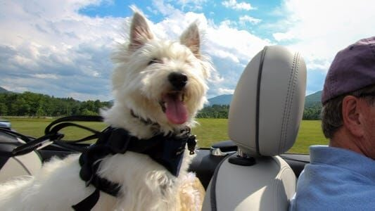 Best Dog Harnesses For Cars In 2021