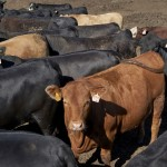 Cattle Producers Have A Beef With 'it's What's For Dinner' Marketing Campaign