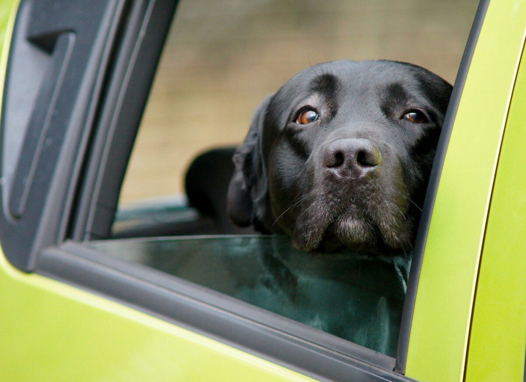 Heads Up! To Avoid Danger, Keep Your Dog's Head Inside The Car