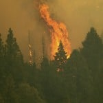 Giant California Sequoias Wrapped In Aluminum As Fire Nears