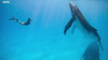 Watch Now: Couple Has Breathtakingly Close Encounter With Group Of Humpback Whales