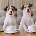 From Canine Coffee Klatches To Doggie Social Groups – Connecting With Fellow Passionate Pet Parents Is Easier Than Ever