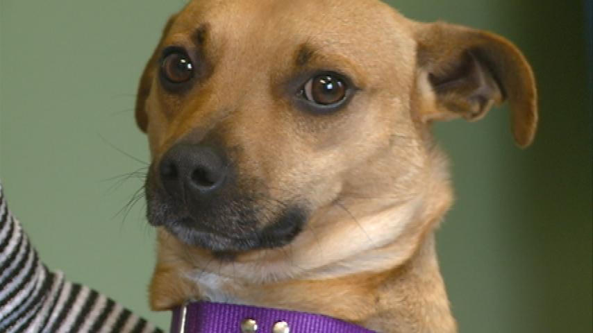Coulee Region Humane Society is seeing more abandoned pets