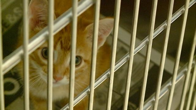 Humane Society Adopt-a-Thon comes to a close