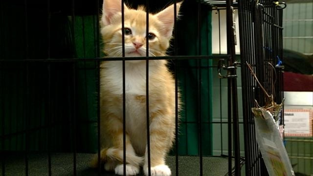 Coulee Region Humane Society holds adopt-a-thon
