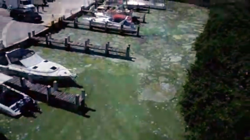 New center at university to fight algal blooms
