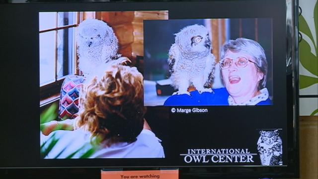 An elderly owl's two-decade-long careergets celebrated