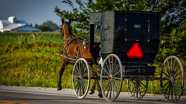 Horse killed, 5 people hurt when SUV rear-ends Amish buggy