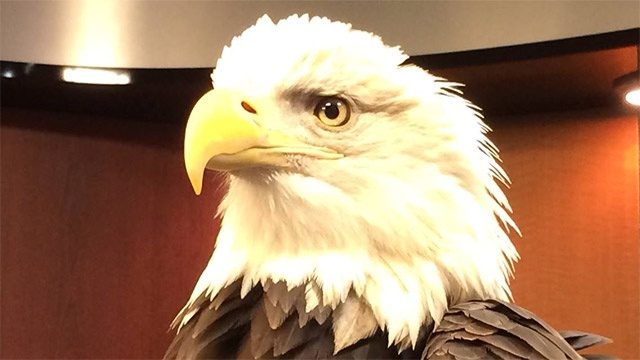 Wis. DNR launches bald eagle license plate photo contest