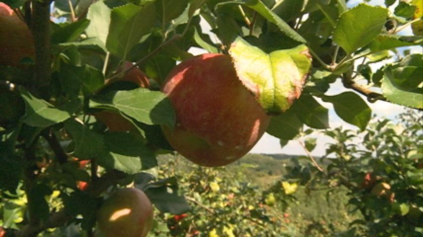 Tips from a local pro on growing the perfect apple