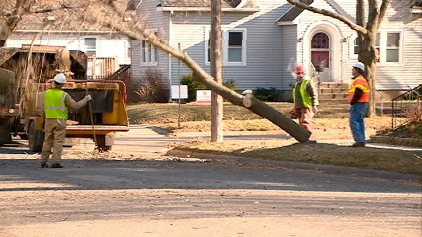 City cutting down ash trees on boulevards