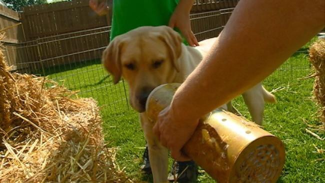 'Barn Hunt' competition demonstrated at La Crosse Interstate Fair