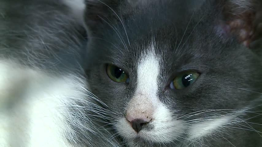 La Crosse residents now have several options to renew their pet's license