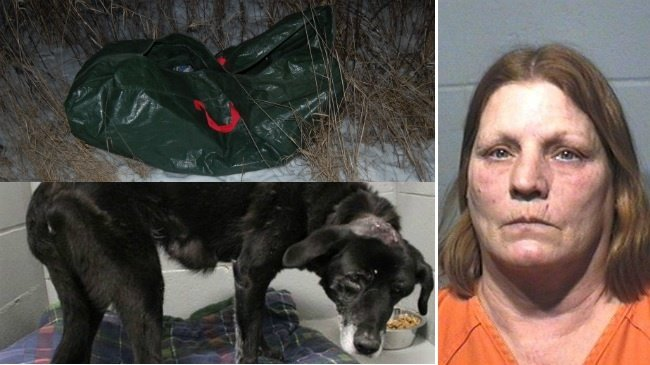 Owner of abandoned dog admits to hitting her in head with hammer