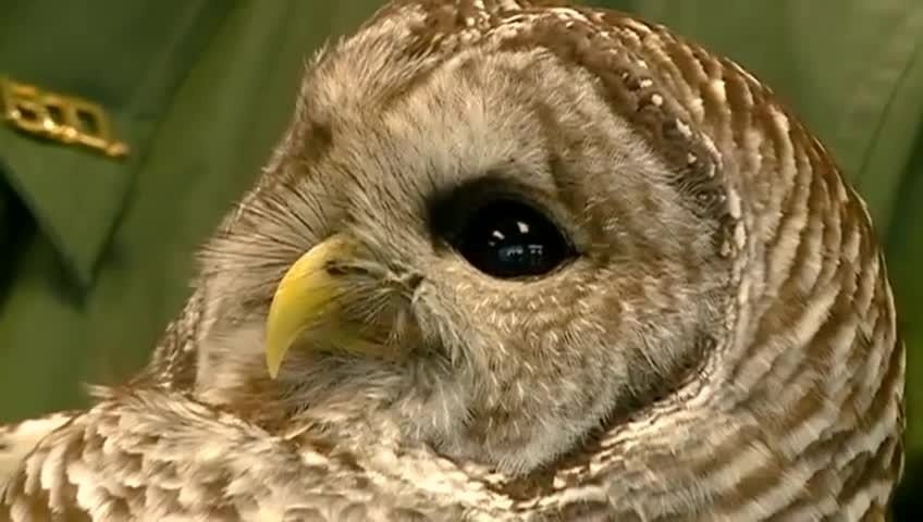 Birds of prey to be released back into nature