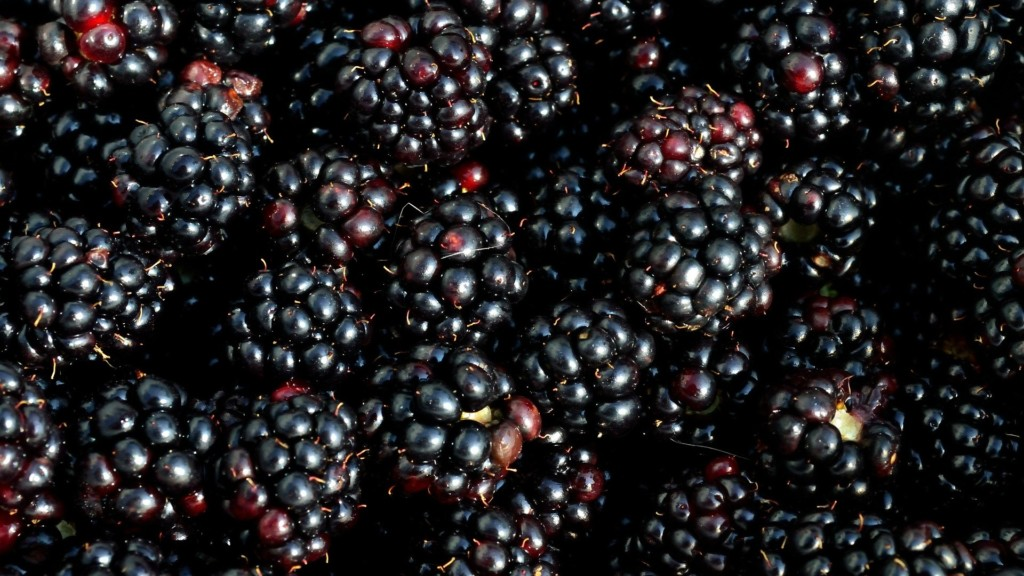 Hepatitis A cases linked to blackberries