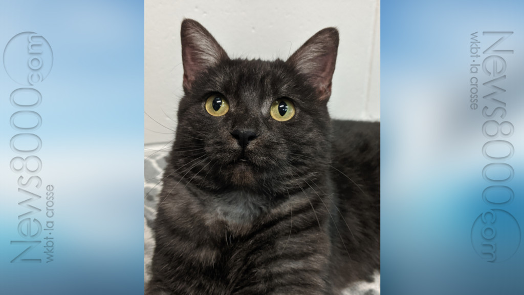 Pet of the Week – Cassee