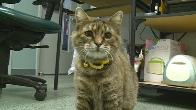 About 30 cats adopted during fee-waived event