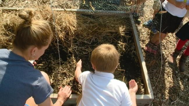 Students in La Crosse plant seeds in school garden