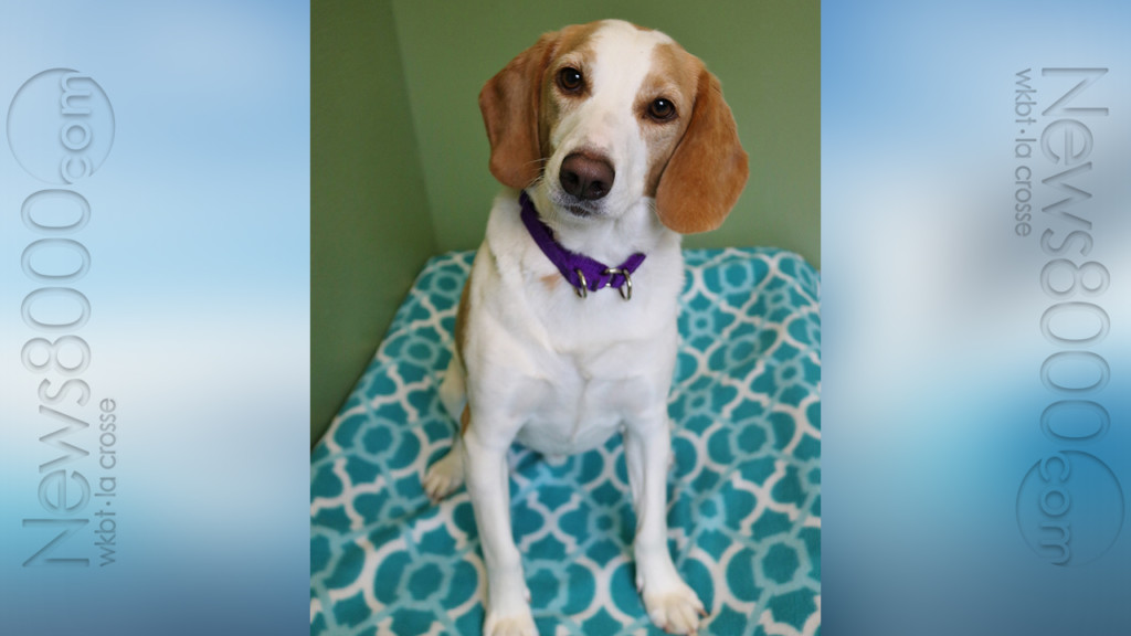 Pet of the Week – Copper