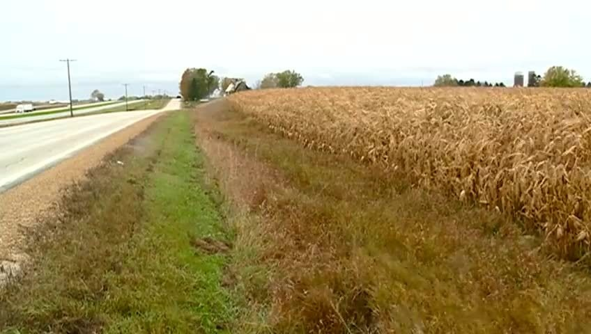 Corn stalks may remain in Minnesota throughout winter