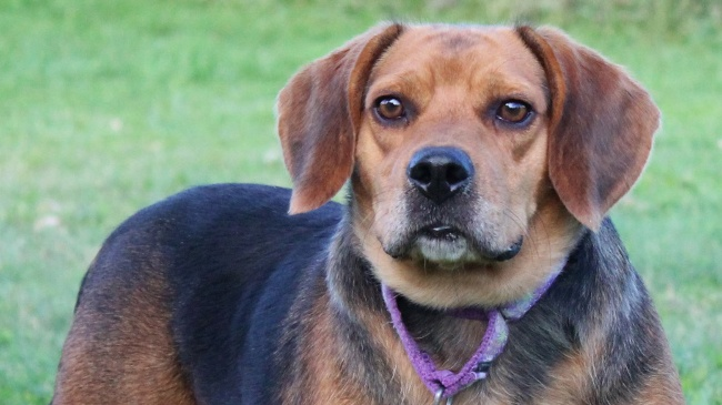 Pet of the Week – Cosmo
