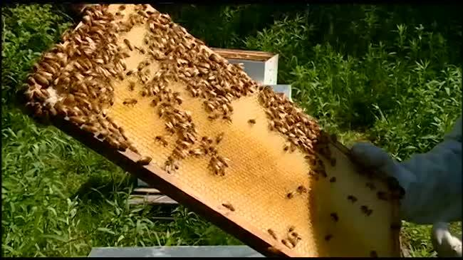 Council: La Crosse residents can keep bees on property