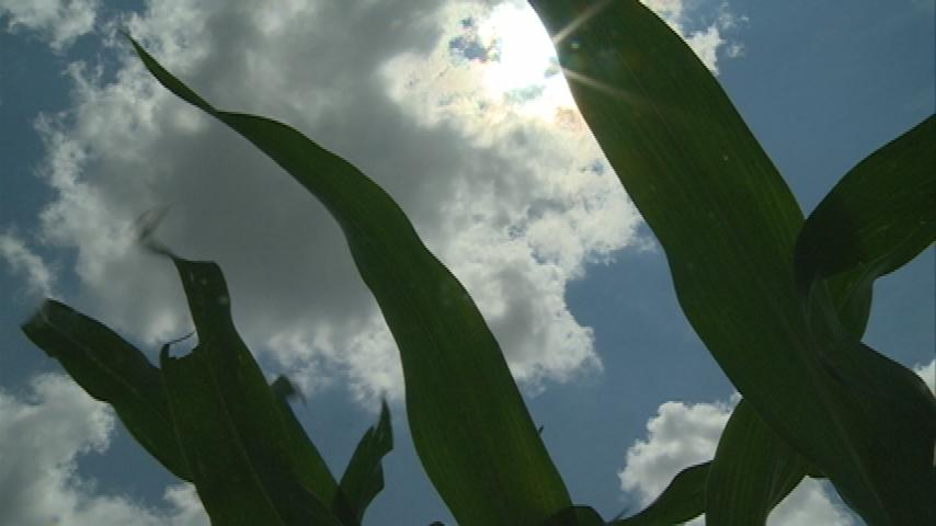 Minnesota crops develop ahead of schedule as fall approaches