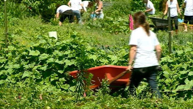 Businesses, United Way team up for Day of Caring