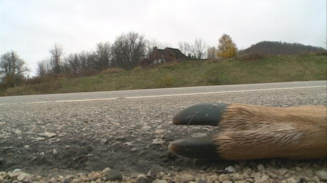 Area car-deer accidents on the rise