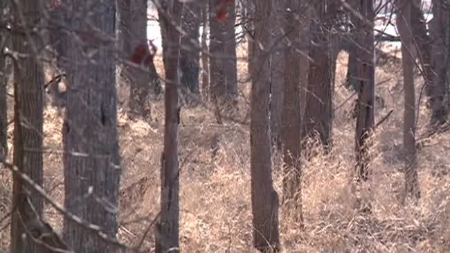 DNR board OKs buck-only for just 1 Wisconsin county