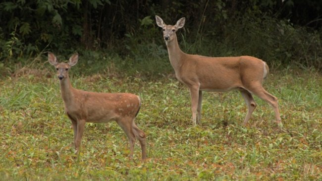 Walker wants better fencing, deer movement bans to fight CWD