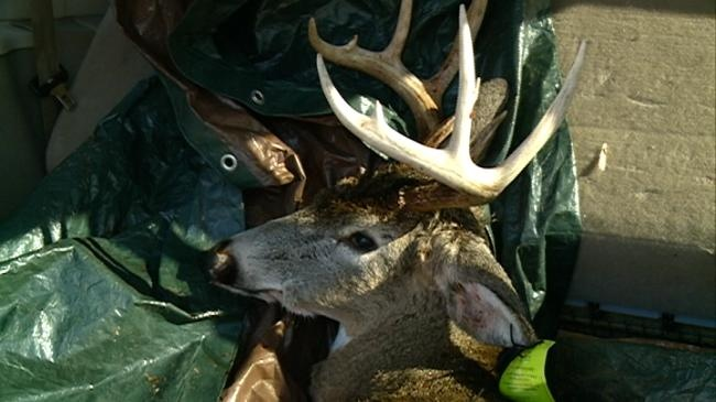 Local businesses suffer due to new online deer registration