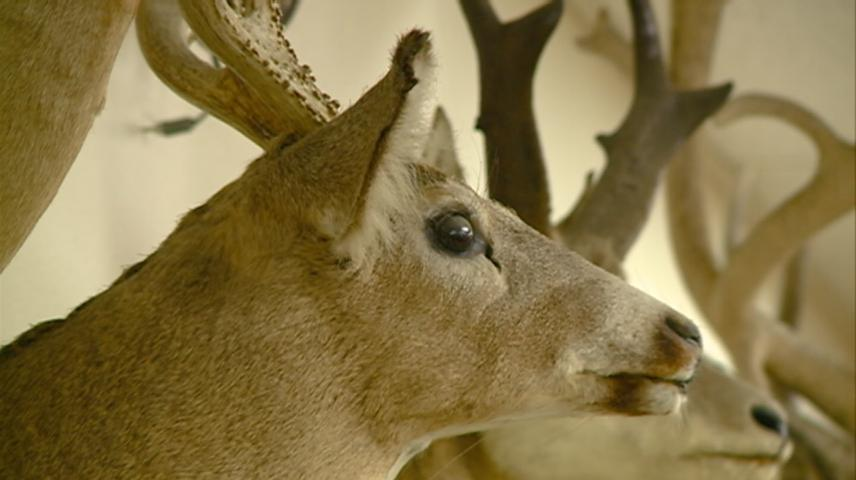 DNR proposes buck-only restrictions in just 1 county