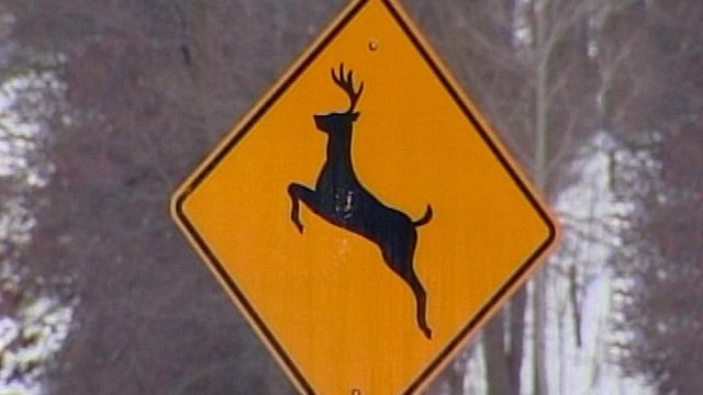 Watch out for that deer!