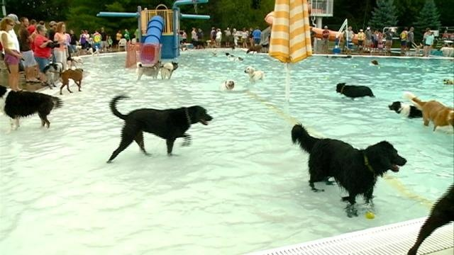 Area dogs swim at annual 'Diggity Dog Dip'