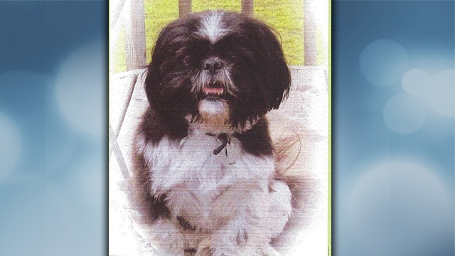 Dog reported stolen in Vernon County