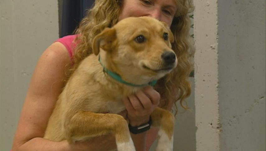 Local shelters take in out-of-state rescue dogs in danger of being put down
