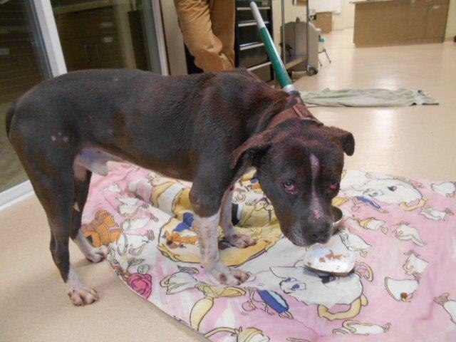 Police: Injured dogs suffering from malnutrition found during investigation