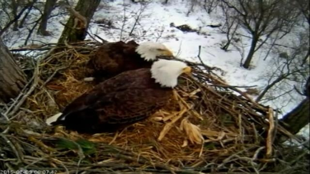 Students monitor eagles nest for class assignments