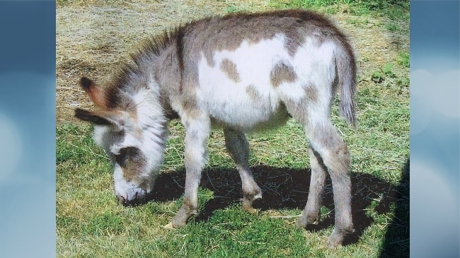 Dogs that killed donkey to be returned to owner