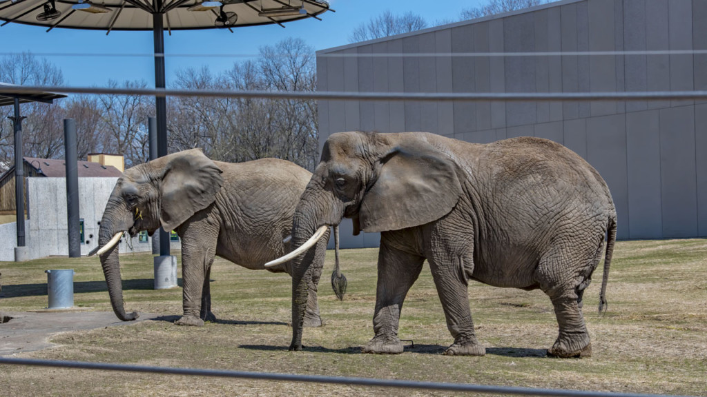 Milwaukee County Zoo opens revamped elephant exhibit