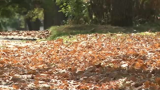 Warm, dry weather leads to early start to fall color season