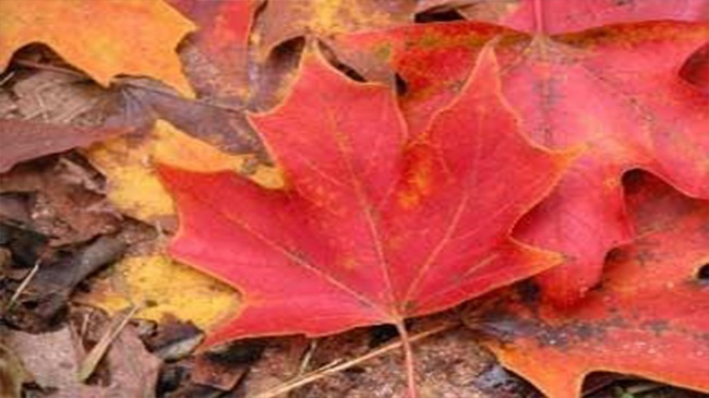 Leaf and yard waste collection sweeping area neighborhoods