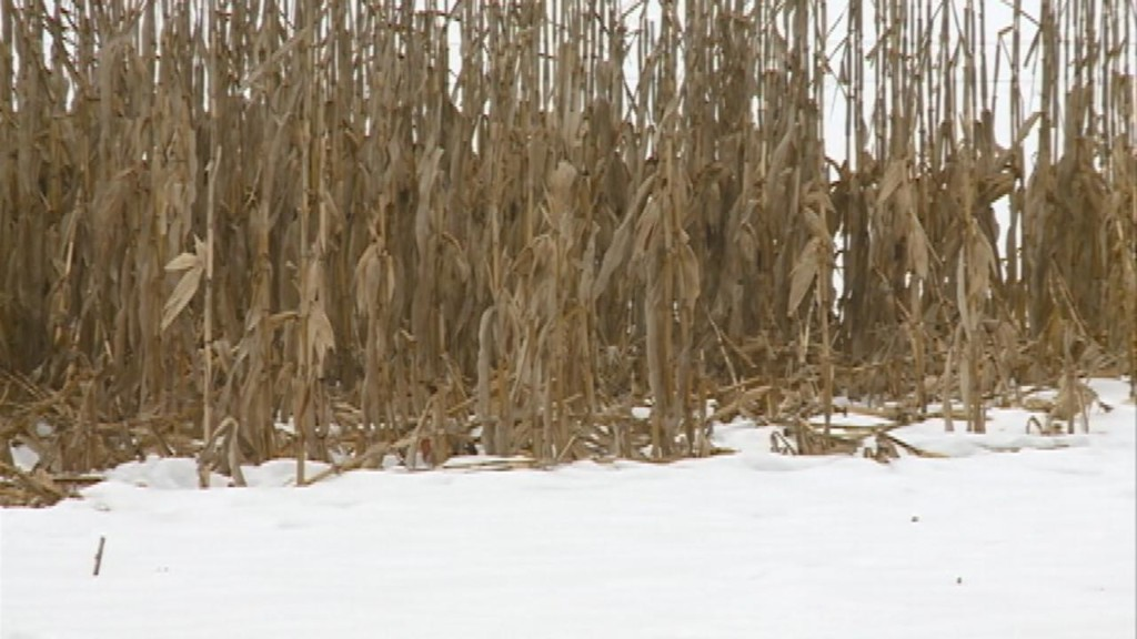 How this winter is affecting farmers