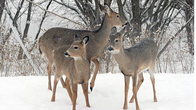 DNR looks to set hearing on new CWD regulations