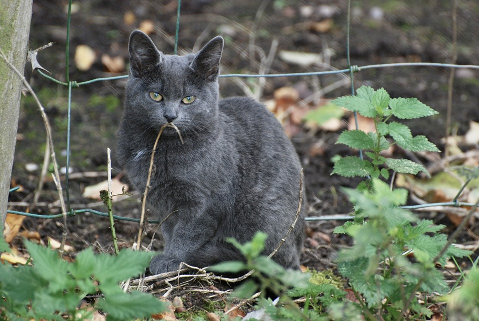 Iowa city suspends policy allowing police to kill feral cats